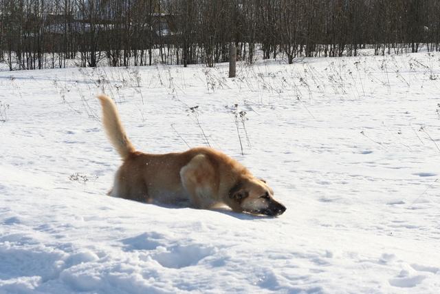 happydog3