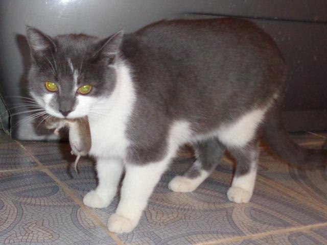 кошка с мышью фото