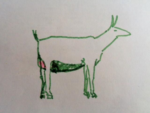 как определить беременность козы фото 5