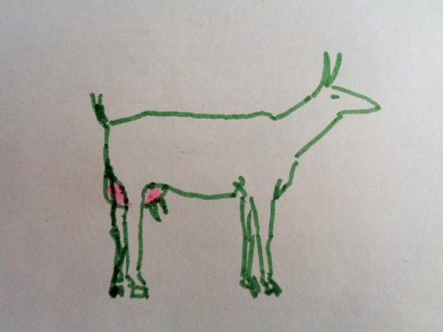 как определить беременность козы фото 4