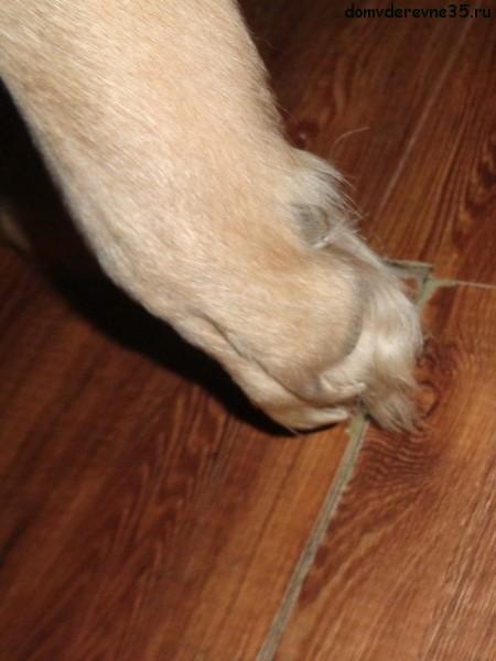 Волосатые собачьи пальцы