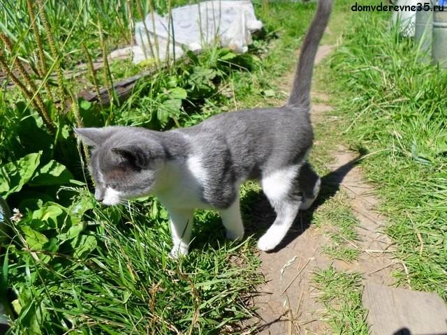 котенок в деревне фото
