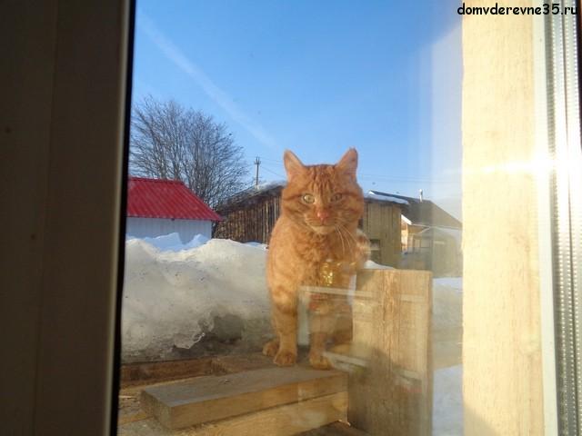 кот за окном