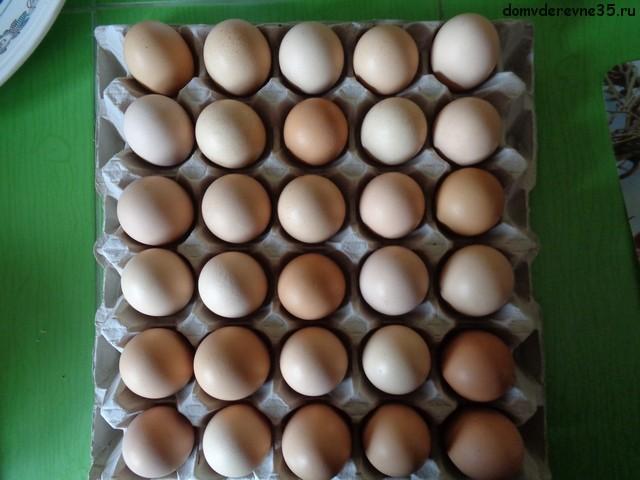 фото яиц домашних кур