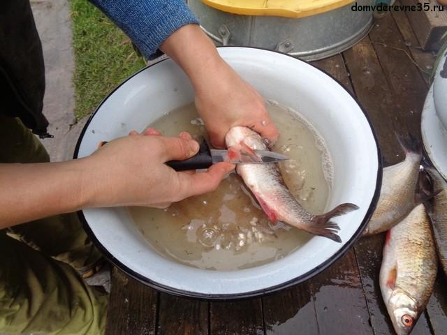 разделка речной рыбы