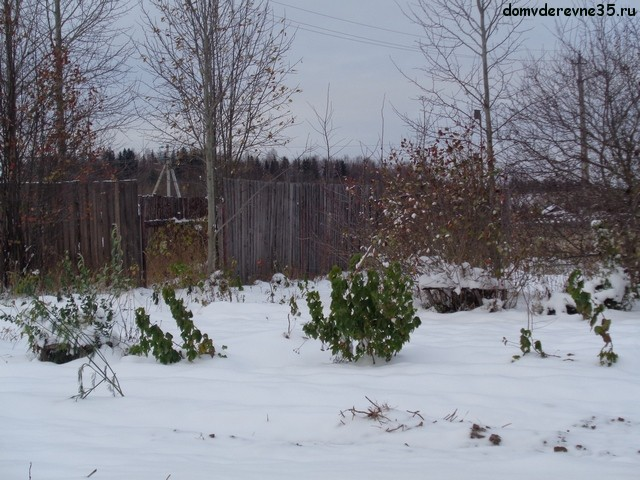 смородина под снегом
